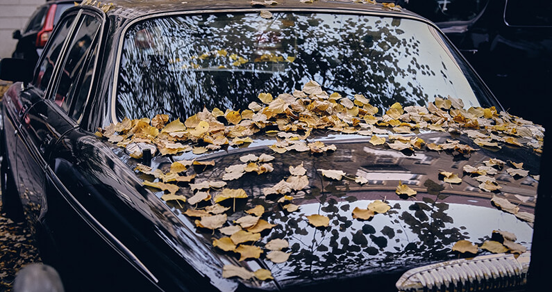 Car Covered in Leaves